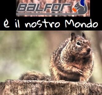 BALFOR, i professionisti del legno
