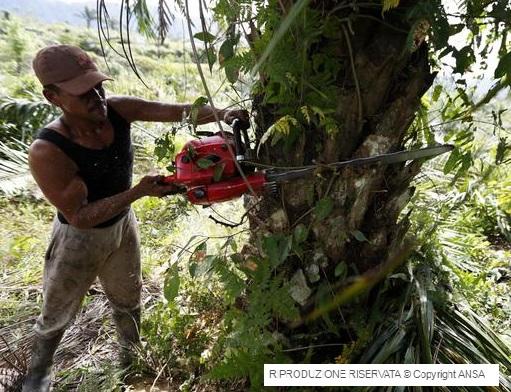 Perdere biodiversità forestale può costare 500 miliardi di dollari