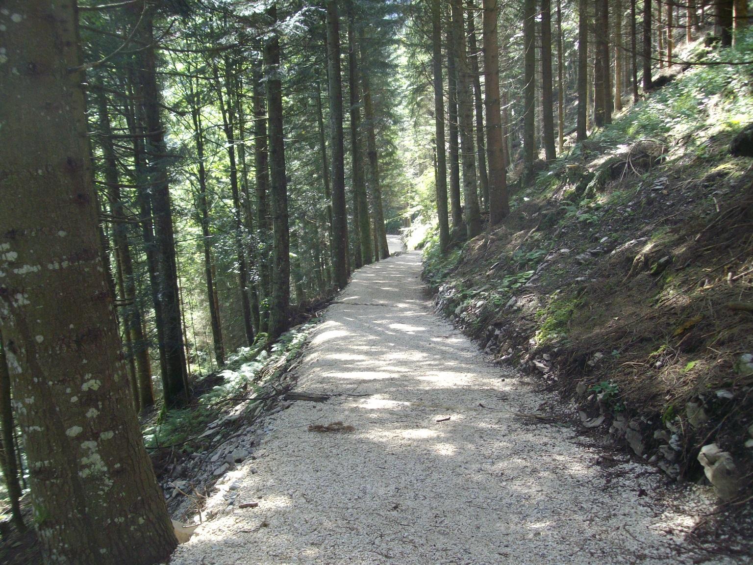Friuli: Incrementi boschivi,SPANO: 3.726.000 euro ai comuni