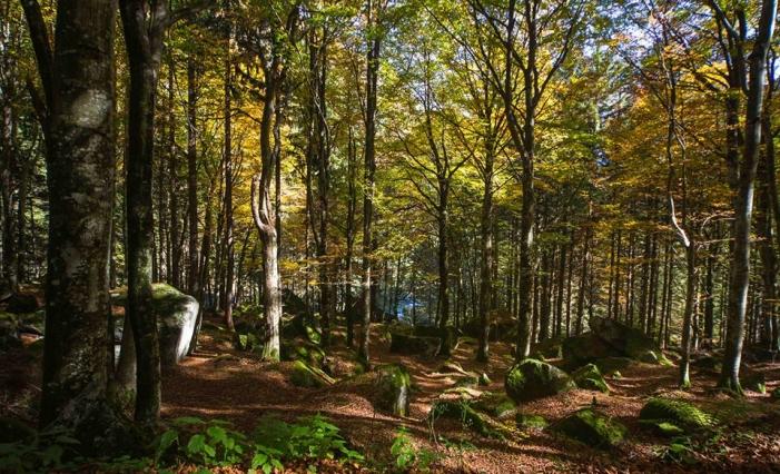 Coldiretti Sondrio: «lavoriamo perché i boschi tornino a produrre ricchezza»
