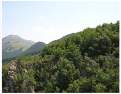 Uncem Piemonte: ilCONVEGNO 'LA VALORIZZAZIONE DEL LEGNO CONFRONTI E PROPOSTE