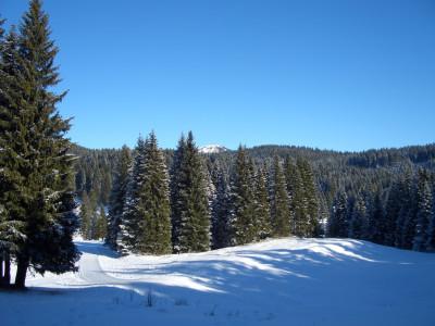 Cultura Ambientale e forestale condivisa