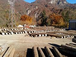 Regione Friuli: 2a Asta dei legnami di pregio