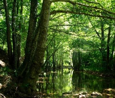 Il nuovo piano di gestione forestale per i servizi ambientali e i prodotti certificati FSC nelle foreste di pianura