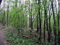 PSR REGIONE PIEMONTE: aperto il bando sull'innovazione in campo forestale