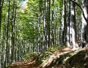 Emilia Romagna-Piano forestale, via libera dalla Commissione Ambiente