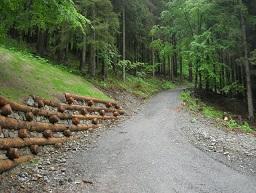 Progettazione viabilità forestale, giornata di studio a Torino