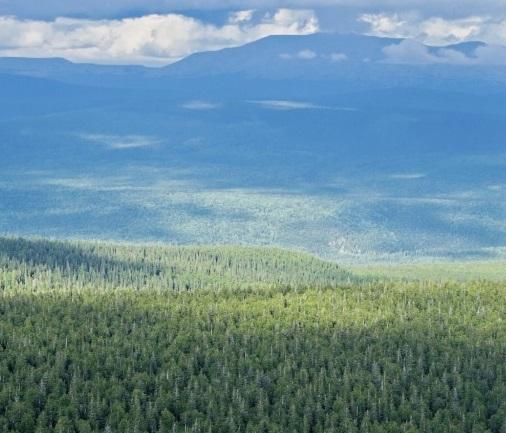 Foreste al ritmo del clima