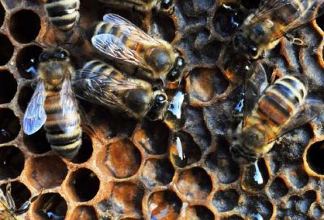 La casa di qualità per le api, in Trentino la prima azienda apistica certificata Pefc