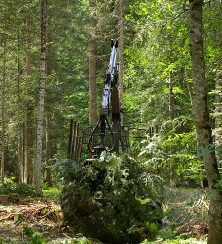 PSR_Provincia autonoma di Trento: ecco le misure per il settore forestale