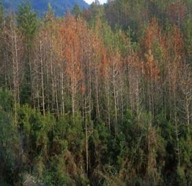 PSR Regione Liguria: 23,91 milioni al sostegno del settore forestale