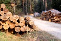 Veneto: Energie rinnovabili e settore forestale, bando Psr da 3,5 milioni per investimenti