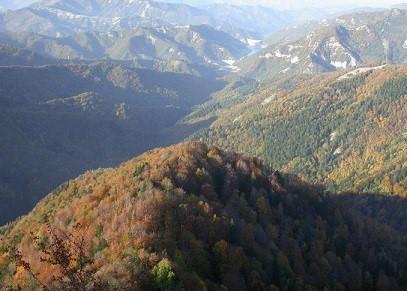 Regione Toscana: contributi agli ecosistemi forestali
