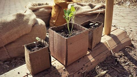 Agroecologia, tutta un'altra Agricoltura