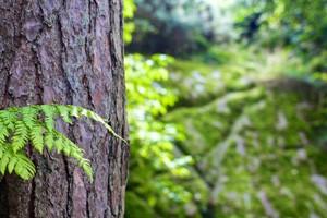 Nuove opportunità economiche per i progetti nel settore forestale