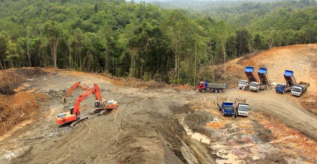 Il contributo UE alla deforestazione crescerà del 25% entro il 2030