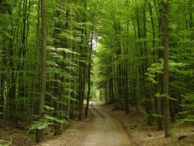 Utilizzazioni boschive in aumento nella montagna interna Carnia, Canal del Ferro e Valcanale