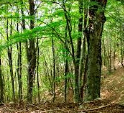 Regione Lombardia: 2,9 milioni per le misure forestali