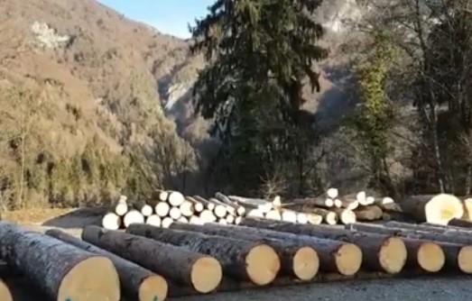 FVG - 3a Asta Regionale del legname di pregio
