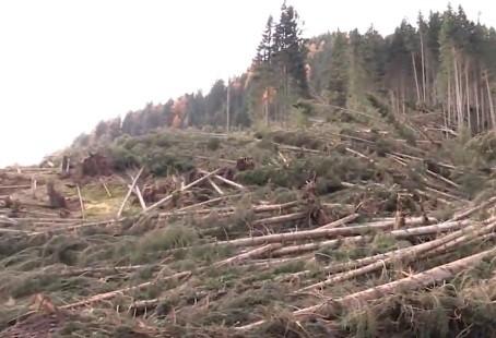 Aggiudicati i 150 mila metri cubi di abete rosso spiantato in Alta Val di Fiemme