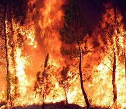 Il bosco brucia: un'occasione per riflettere sulla politica forestale in Italia