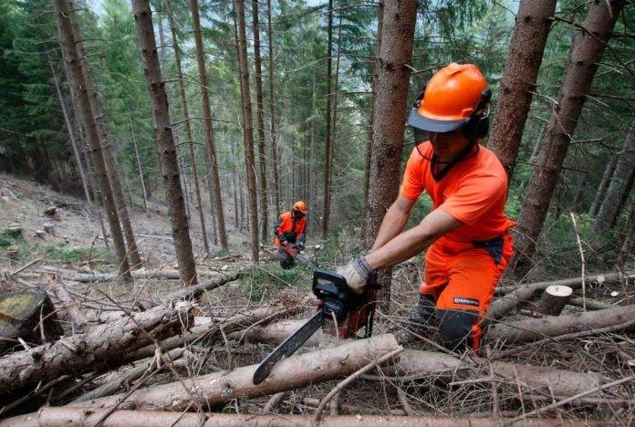 Codice forestale, per Coldiretti aumenterà i posti di lavoro