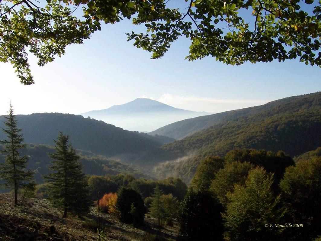 Via libera al Codice forestale