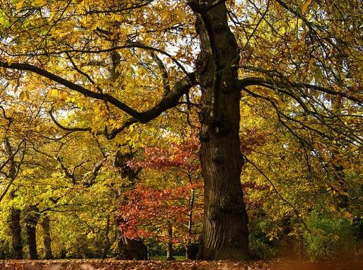 21 novembre, è la Giornata nazionale degli alberi: le iniziative in Italia