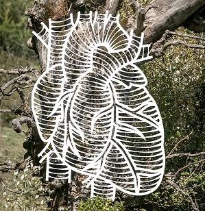 Il cuore di betulla nel Parco nazionale d'Abruzzo, Lazio e Molise