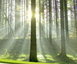 Comunicato STAMPA FIPER - Tempesta 29 ottobre 2018: punto di svolta nella politica forestale nazionale