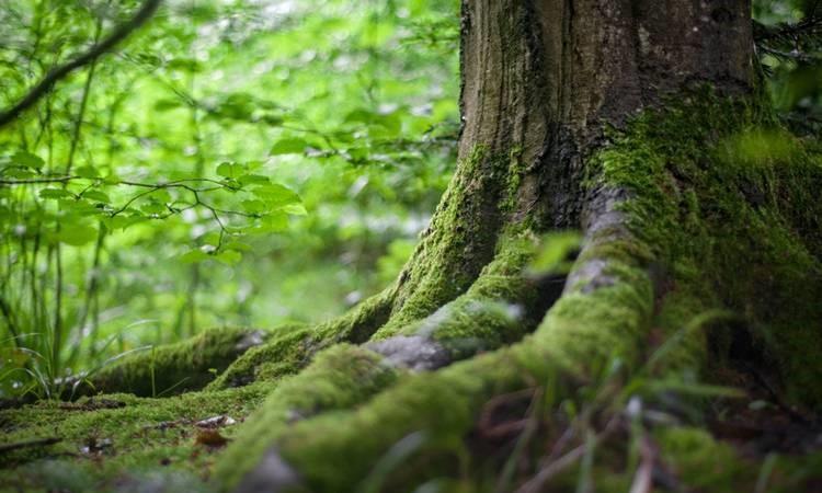 Nuovo Standard FSC di Gestione Forestale per l'Italia