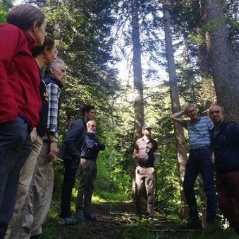 La valle Germanasca cresce con la filiera legno locale