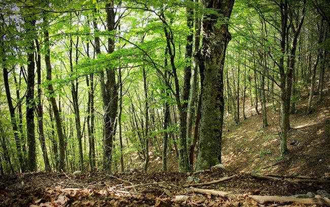 Foreste: revisione e l'armonizzazione della normativa nazionale