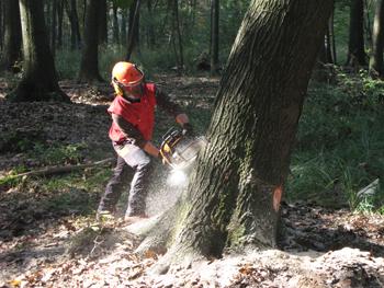 Seminario sulle iniziative di formazione ed informazione in campo forestale, l'11 gennaio 2018 a Torino