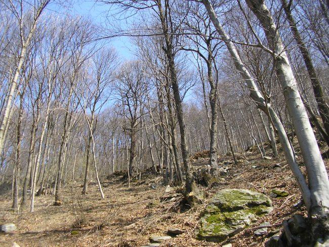 11 dicembre: presentazione delle misure del Piano di Sviluppo delGal Valli di Lanzo, Ceronda e Casternoneper il settore forestale