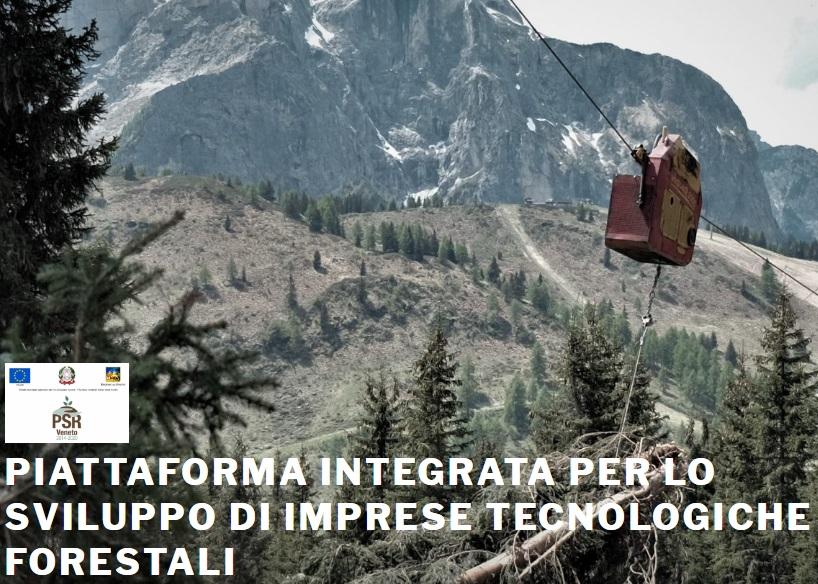 La piattaforma digitale per la compravendita del legname veneto