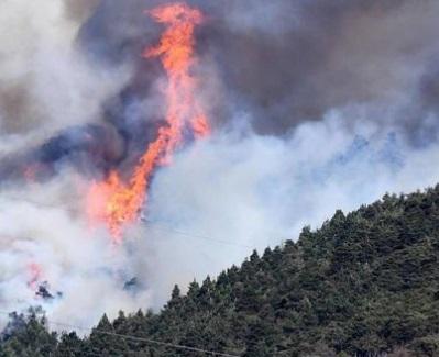 Il Consorzio Forestale Alta Valle Susa e Pro Silva realizzeranno una visita nei boschi di Val Susa percorsi dal fuoco