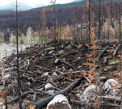 Incendi boschivi in Piemonte, la ripresa è consultabile online