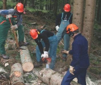 VENETO - Corso di formazione per Istruttori Forestali