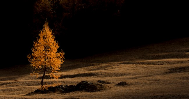 Foreste più belle d'Italia: i vincitori del concorso fotografico internazionale PEFC