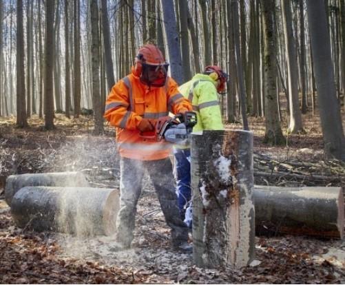 La sicurezza negli interventi forestali: un incontro gratuito a Varallo