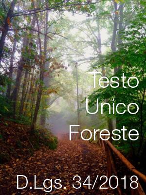 Pubblicato il Testo unico in materia di foreste e filiere forestali