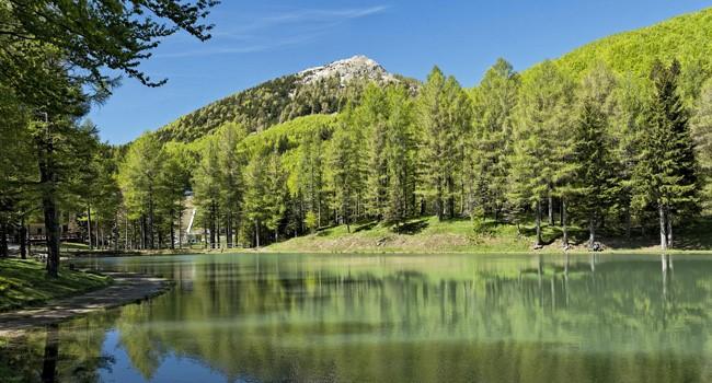 Regione Emilia-Romagna-Fare dei boschi un motore di crescita economica verde e una leva contro lo spopolamento dell'Appennino