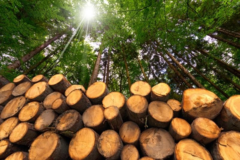 Al voto del Parlamento europeo il compromesso sul regolamento per la gestione delle foreste