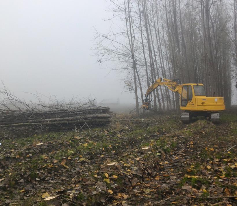 Regione Piemonte: MISURA 8.1.1 - 'Imboschimento di terreni agricoli e non agricoli'