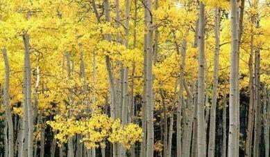 Biomasse solide per uso energetico e la normaUNI in consultazione