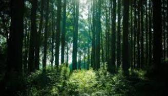 """Regione Umbria PSR 2014-2020: foreste, pubblicato nel """"bur"""" bando per investimenti; Cecchini: """"a disposizione 4 mln 600 mila euro"""""""