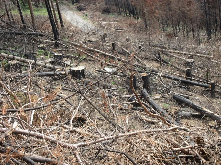 Incendi boschivi in Piemonte, a che punto siamo?