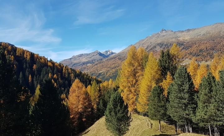 Presentazionedel decimoRapporto sullo stato delle foreste in Lombardia