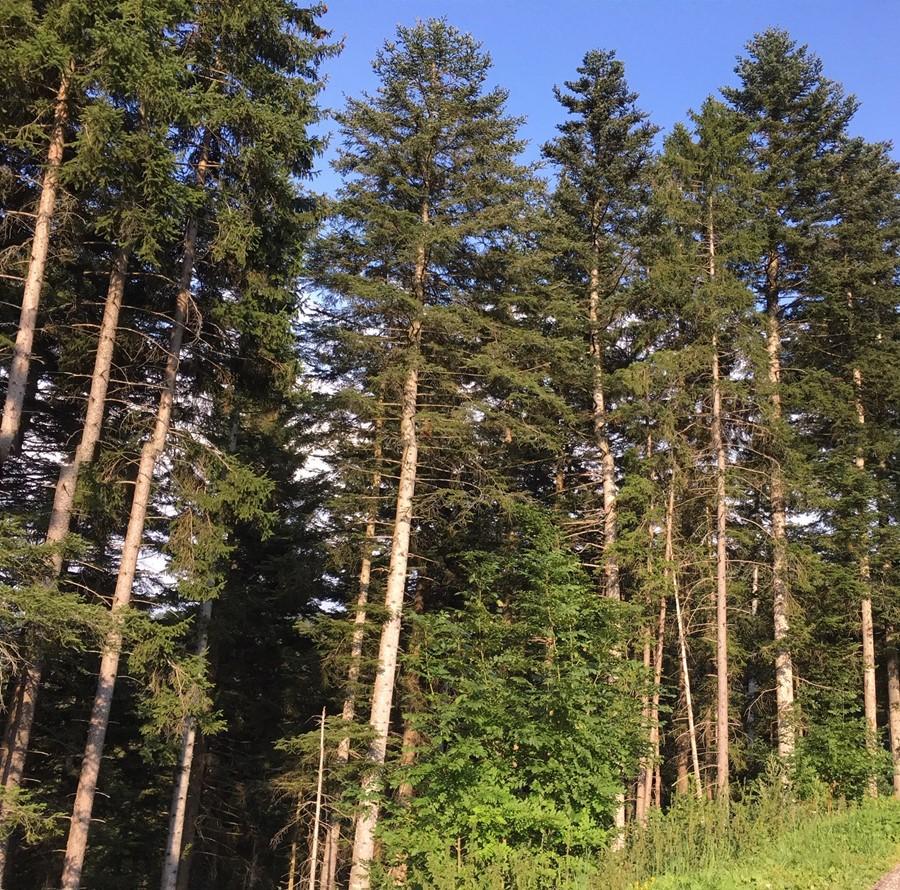 21 marzo: Giornata Mondiale delle Foreste